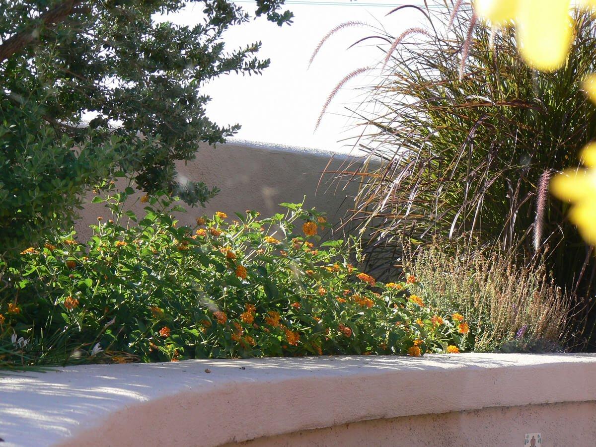 Irrigation companies in Tucson